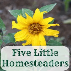 Who is Five Little Homesteaders?