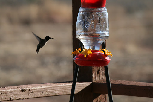 Who is Hummingbird Ranch Vacation (House Rental)?