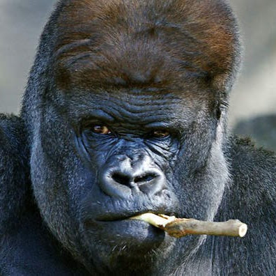 Who is Silverback?