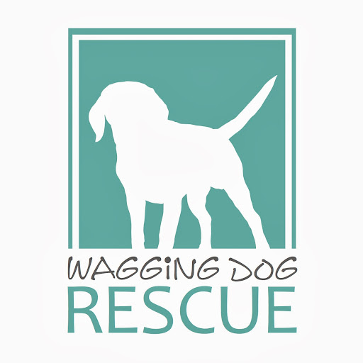 Who is Wagging Dog Rescue?
