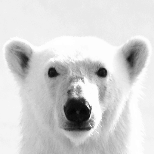Who is Polarbear?