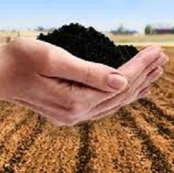 Who is humic acid?