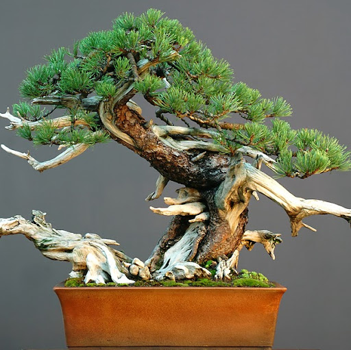 Who is Zen Garden Bonsai?
