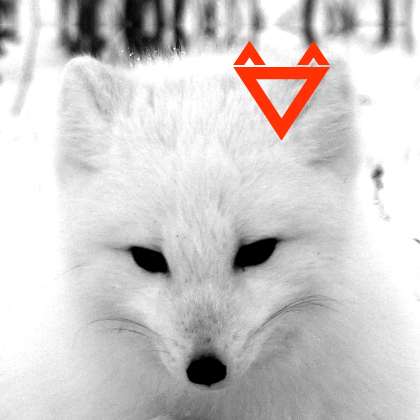 Who is Polarfox?
