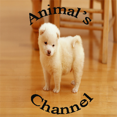 Who is Channel Animal's?