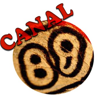 Who is Canal88?